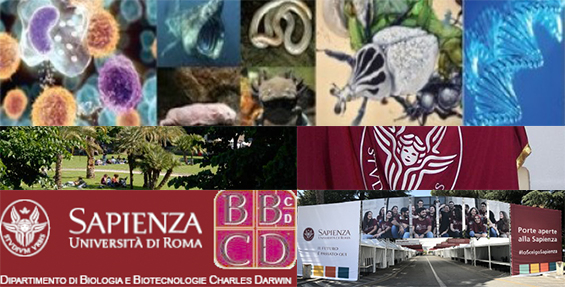 bbcd, biologia e biotecnologie, darwin, sapienza, zambenedetti, charles darwin, biologia sapienza